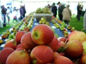 apples 2012